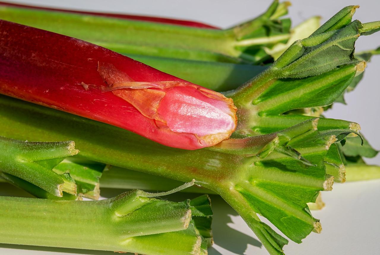 Culture Et Entretien De La Rhubarbe culture de la rhubarbe : conseils pour plantation, et la récolte